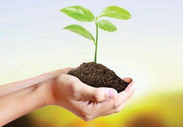Nasveti za sajenje sadnih sadik
